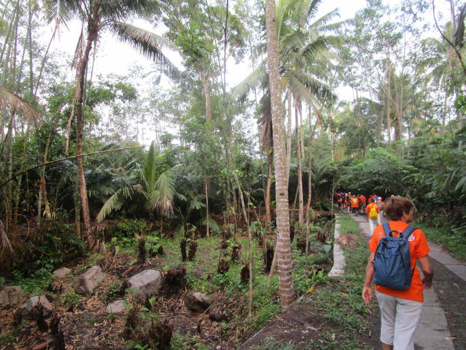Marche dans la forêt tropicale